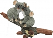 Koalas in Love