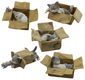 Playful Kitten - set of 5