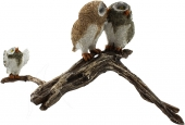 SPECIAL - Owls on Branch